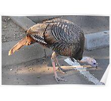 Weedy Field's Friendly Turkeys Poster