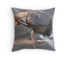 Weedy Field's Friendly Turkeys Throw Pillow