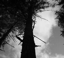 Ominous Tree by Ashely  Hendrickson