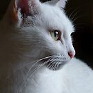 Deep In Thought by Sally Green
