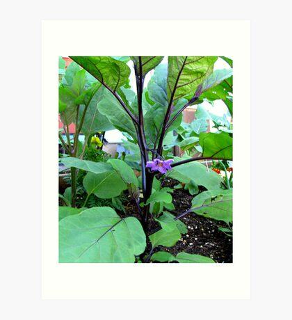 Pretty Purple Eggplant Blossom, in Eugene Oregon Art Print