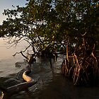 Mangrove trees at early morning. by Karel Kuran