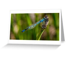 All dressed up in blue Greeting Card