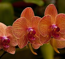 Three Orchids by Mark Wuttke