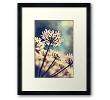 Queen Annes Lace flowers Framed Print