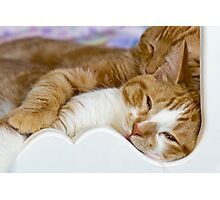 Snuggling Photographic Print