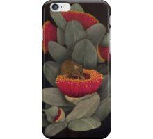 Honey Possum iPhone Case/Skin