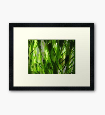 Broccoli Forest Framed Print