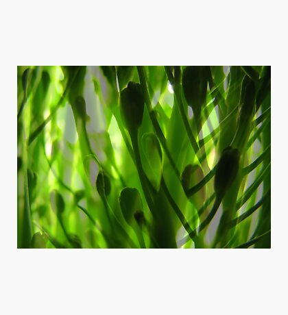 Broccoli Forest Photographic Print