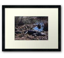 St Marks Gator Framed Print