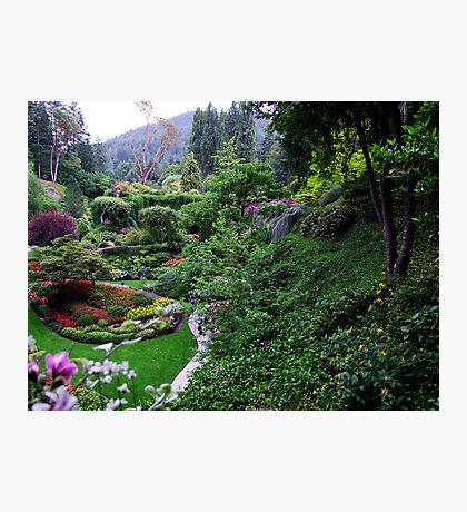 Sunken Garden No.1 Photographic Print