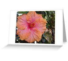 Hibiscus Greeting Card