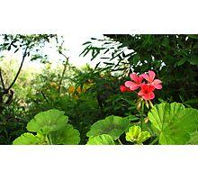 Wild Flower in Greenery Photographic Print
