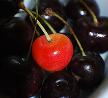 Michigan Cherries  by Michelle BarlondSmith