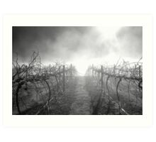 Dead Vineyard Art Print