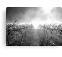 Dead Vineyard Canvas Print