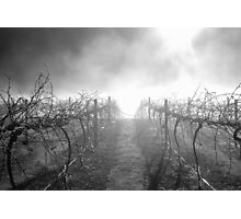 Dead Vineyard Photographic Print