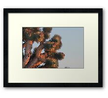 Joshua tree detail at sunset, Cima Dome, CA Framed Print