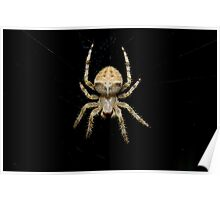 Cat face spider Poster
