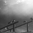 Wood Ducks by pennyswork