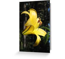 Brilliant Yellow Lily! Greeting Card