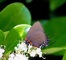 Nectar Gathering by hmclark