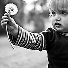 little wishes by deborah brandon