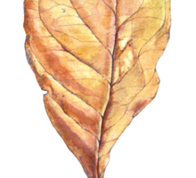 Golden Leaf Sticker