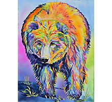Buzzsaw Grizzly Bear Photographic Print