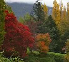 Cascade Gardens in Autumn (Hobart) by ShutterBuggz