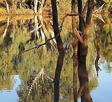 Warrego Reflections by Darla Boyd
