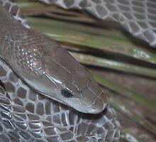 snakeII by scott staley