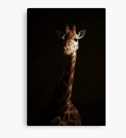 A Gentle Beauty Canvas Print