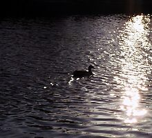 Sunlight Sparkling on Water, and a Duck by M Sylvia Chaume