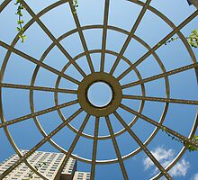 Looking Up - Spring by Craig Goldsmith