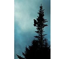 Nevermore. Photographic Print