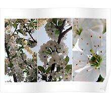 CherryBlossom Stories Poster