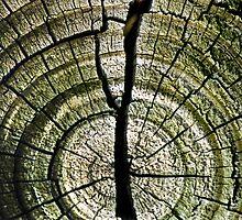 Across the Grain #4 by Jay Gross