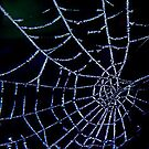 Frosty Web by Trevor Kersley