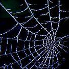 Frosty Web by Trevor Kersley