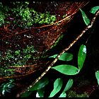 RAINFOREST CLOSEUP NO 1 by mm1208