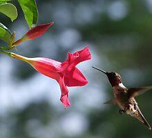 Flying Jewel by Lolabud