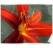 Dark Orange Day Lily Poster