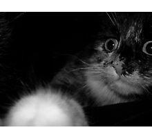 Scaredy Cat Photographic Print