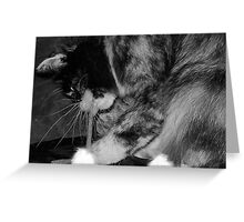 Kitty Treats Greeting Card