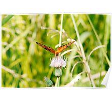 I Spy Butterfly Poster