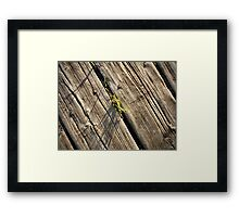 Tuft of Grass on an Old Wooden Pier Framed Print
