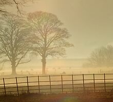 Christmas morning Yorkshire by Gareth Stamp