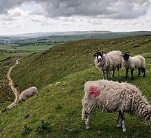 Yorkshire Lamb by Stuart Slavicky