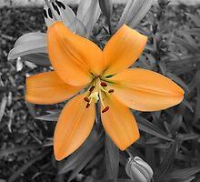 Orange Flower by Nathan Dooley